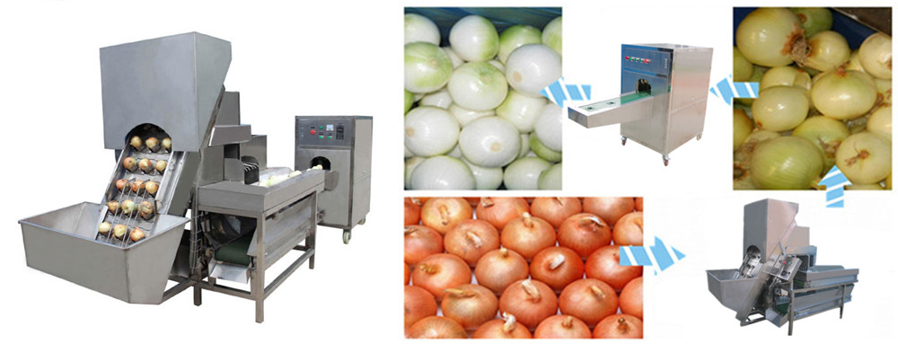Automatic Onion Peeling & Root Cutting Machine Introduction
