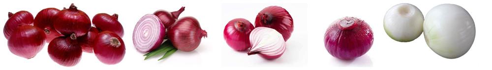 Automatic Onion Root Cutting Machine Application