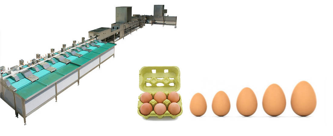 Commercial egg cleaning and sorting machine