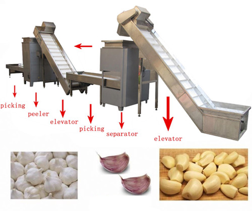 Garlic Separating and Peeling Production Line Working Procedure