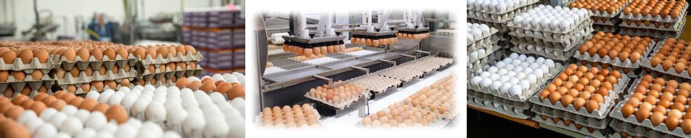 automatic chicken egg washing machine application