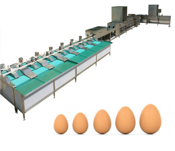 automatic egg cleaning grading line
