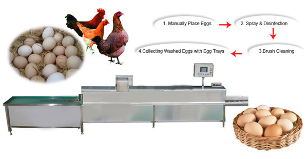 chicken egg washing equipment