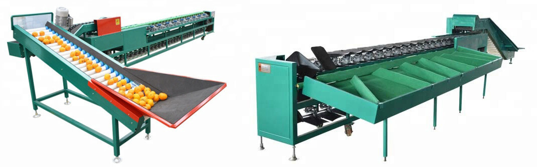 fruit and vegetable sorting machine