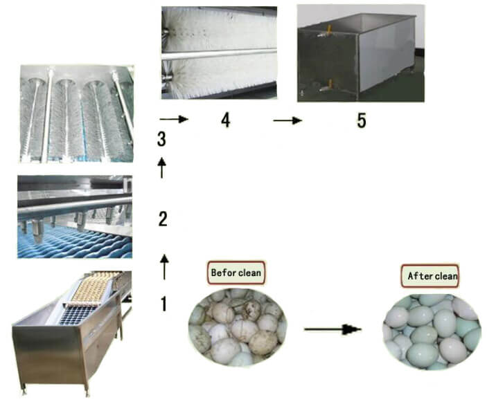 salted duck egg washing process